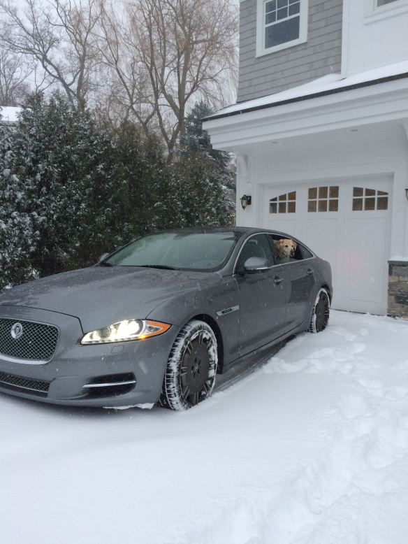 "Taking the Jag out for some winter exercise. Unfortunately, this model isn't all-wheel-drive, so even with snow tires, it was a little too ""adventurous""."